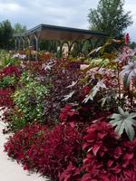 Annuals Garden in August 2017