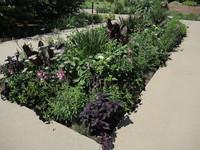 Annuals Garden display, July 2020