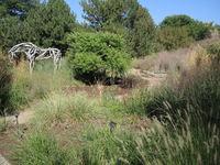 Ornamental Grasses Garden with Butterfield Sculpture