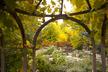 Scripture Garden